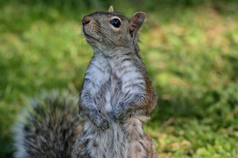 24 Hour Animal Control in NYC, Brooklyn, Bronx, Queens, Long Island City, call 646-741-4333 today! Humane Animal Control · Squirrel Removal · ‎Raccoon Removal · ‎Bird Removal · ‎Dead Wildlife · Mice and Rat Control