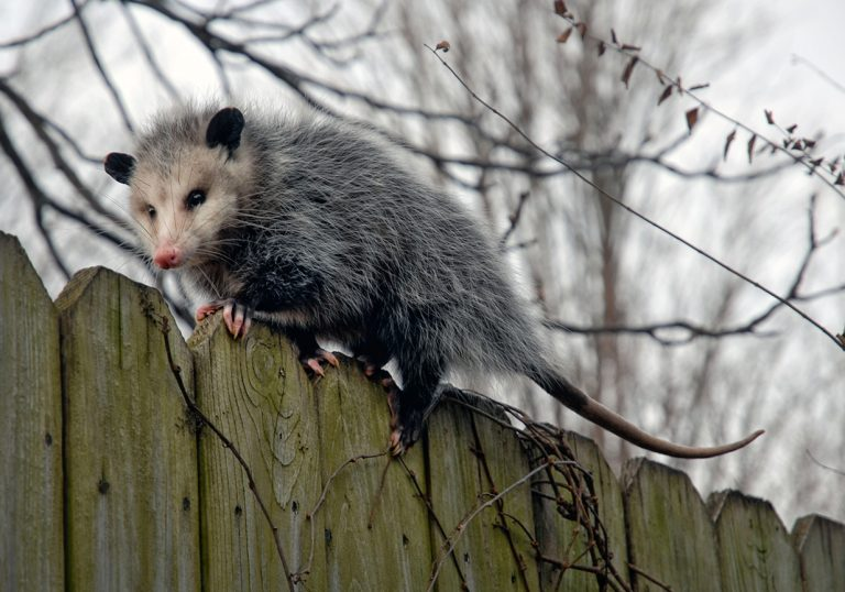 24 Hour Animal Control in NYC, Brooklyn, Bronx, Queens, Long Island City, call 646-741-4333 today! Humane Animal Control · Squirrel Removal · Raccoon Removal · Bird Removal · Dead Wildlife · Mice and Rat Control