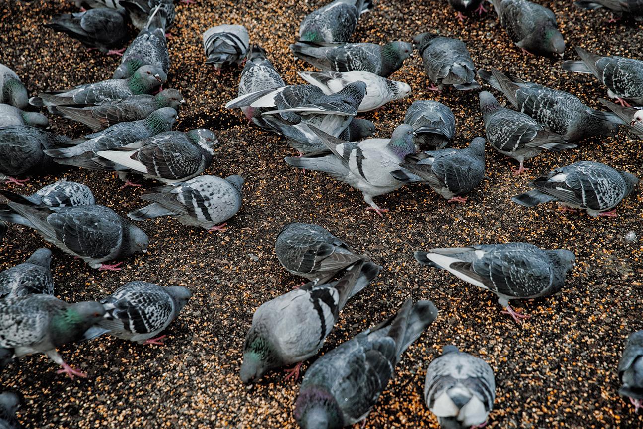 Bird Control & Removal - NY and NJ