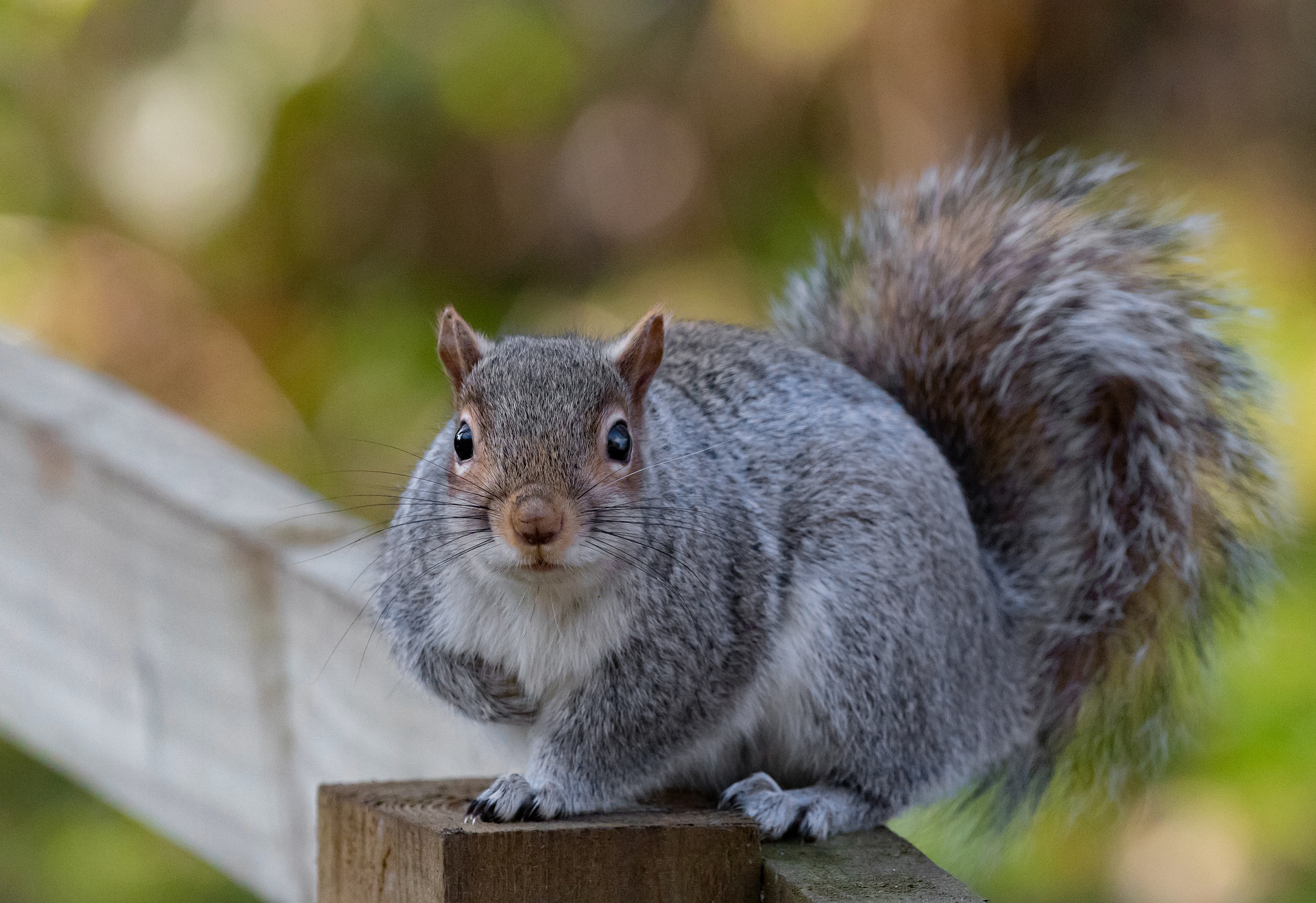 Squirrel Removal Services in NYC and NJ