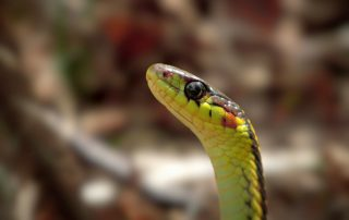 Snake Removal, Control and Prevention