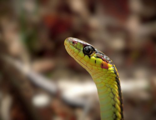 How Professional Snake Control and Prevention Works
