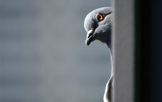 Bird Removal and Control Services