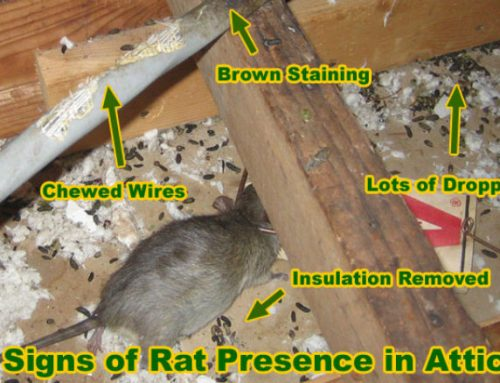 Attic Wildlife Damage Repair in NY and NJ