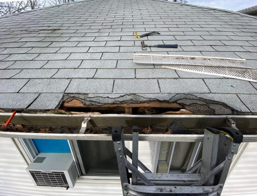 Animal Related Roof Damage