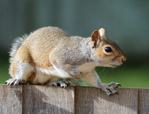 Common Wildlife Problems in Somerville, NJ