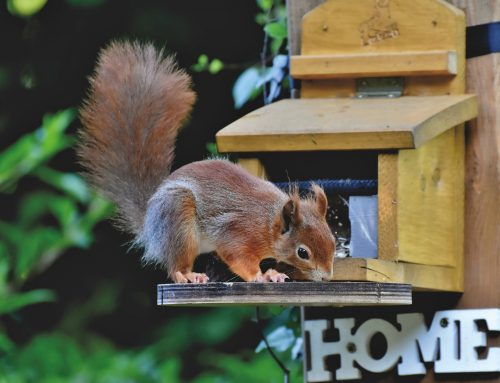 Decontamination After a Squirrel Infestation