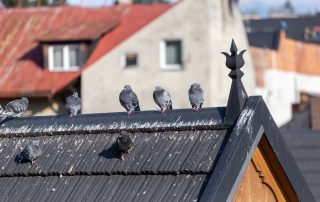 How Do Bird Droppings Become Dangerous