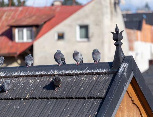 How Do Bird Droppings Become Dangerous?