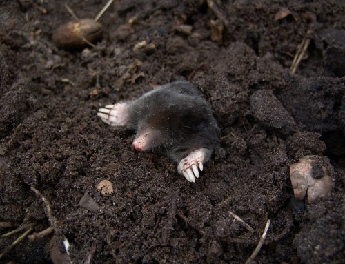 Problems with Dead Animals and When to Get Professional Wildlife Control